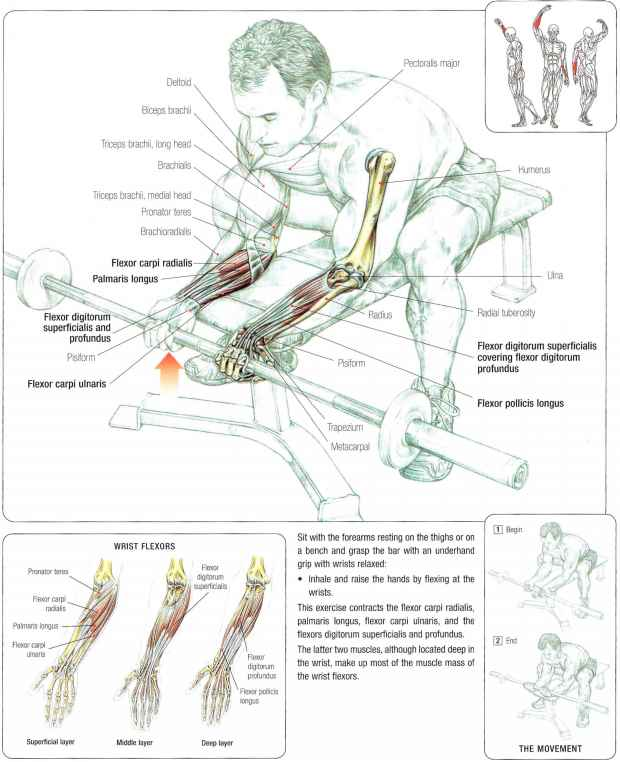 Extensor Carpi Ulnaris Exercises