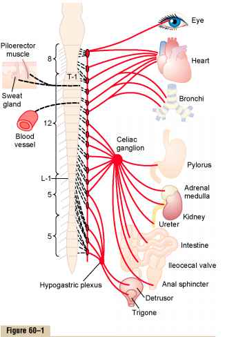 Lateral Chains Spinal Cord