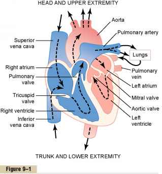Physiologic Anatomy of Cardiac Muscle - Medical Physiology