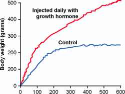 Effects Growth Hormone Cellebrities