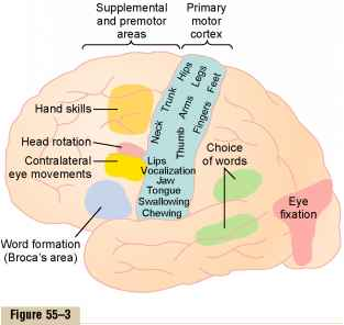 the specialized functions of the different areas of the brain Scientists have suspected for centuries that each hemisphere of the brain has specialized functions  although many functions may involve a number of different areas.