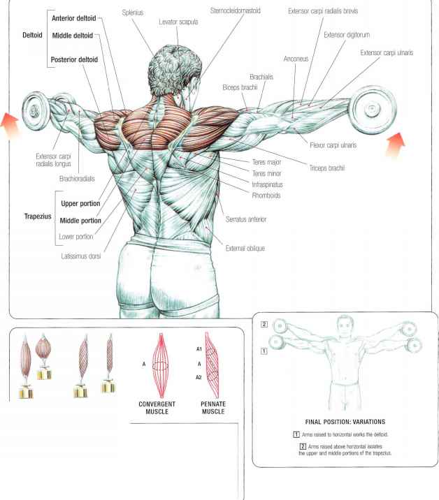 Triceps Workout With Dumbbell
