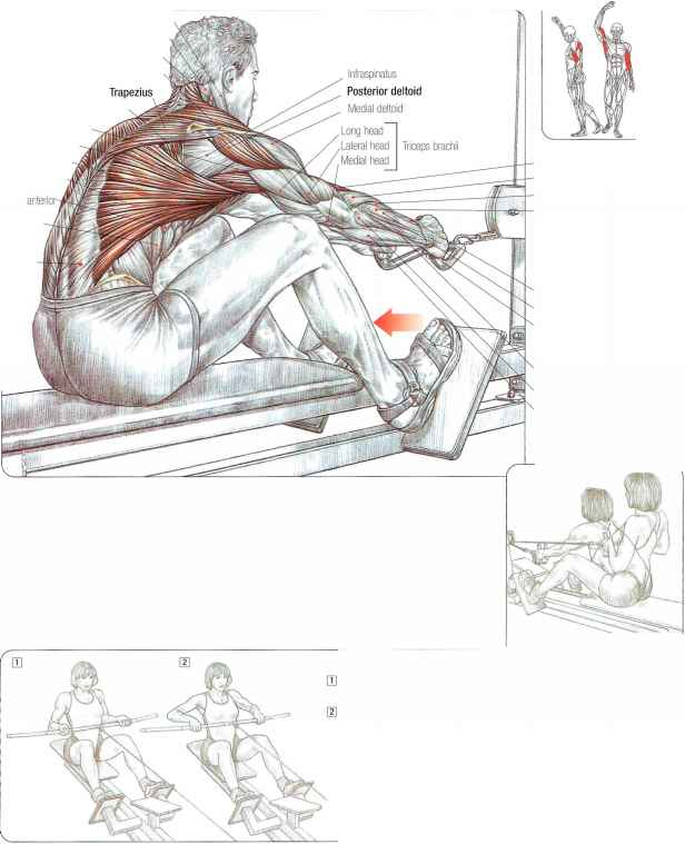 Seated Row Machine Muscles