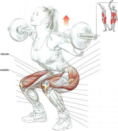 Stretches For Vastus Intermedius