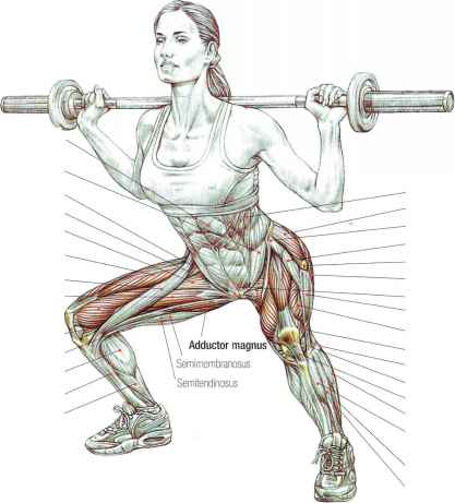 Muscle Group Body Squat