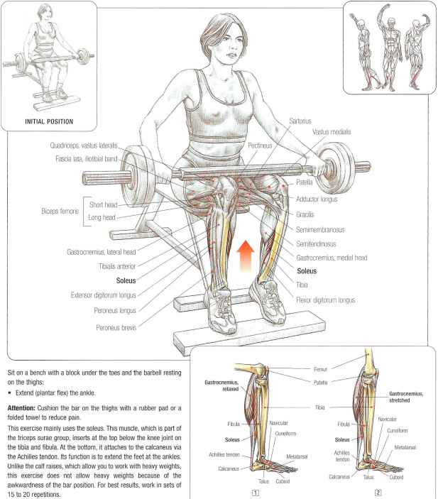 Soleus Calf Raises