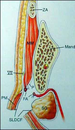 Platysma Submandibular Gland